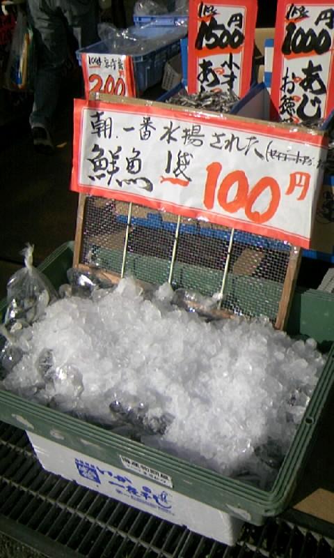 鮮魚入荷しました
